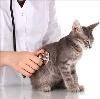 Ветеринарные клиники в Малой Вишере